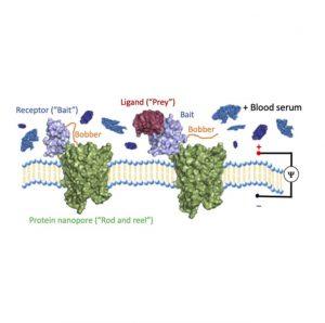 a cartoon depiction of protein nano pores in a cellular membrane